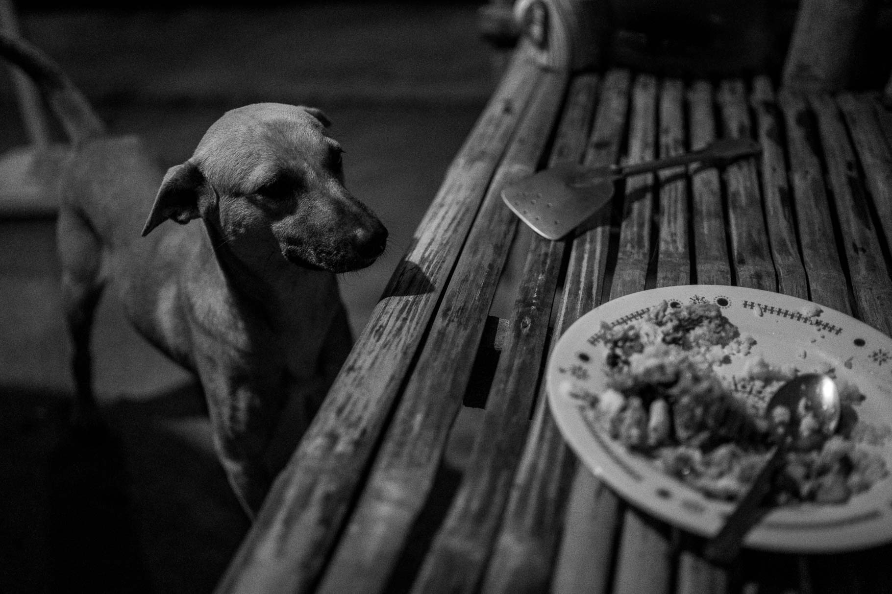 A dog looking at food in Metro Manila
